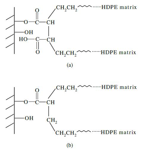 مکانیزم های فرضیه ای بین ماتریس HDPE و آرد چوب با افزودن پلی اتیلن های عامل دار شده با عوامل اتصال دهنده: a) مالئات پلی پروپیلن و b) پلی اتیلن عامل دار شده با اکریلیک اسید