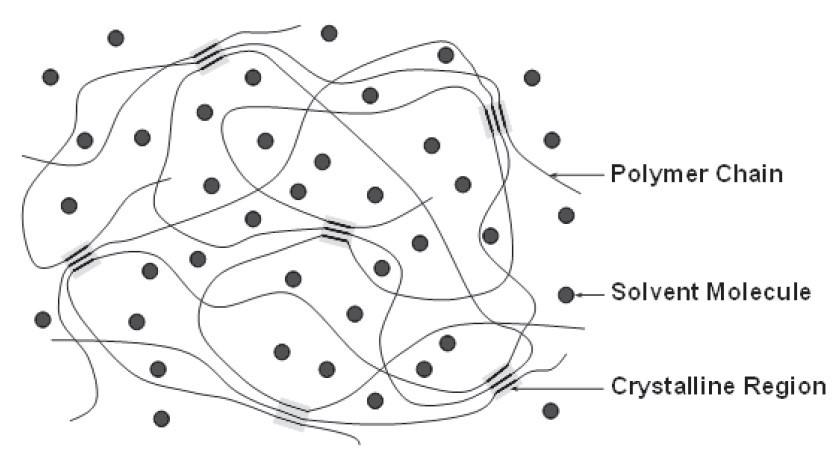 شماتیک ساختار شبکه متورم در یک رشته ژل